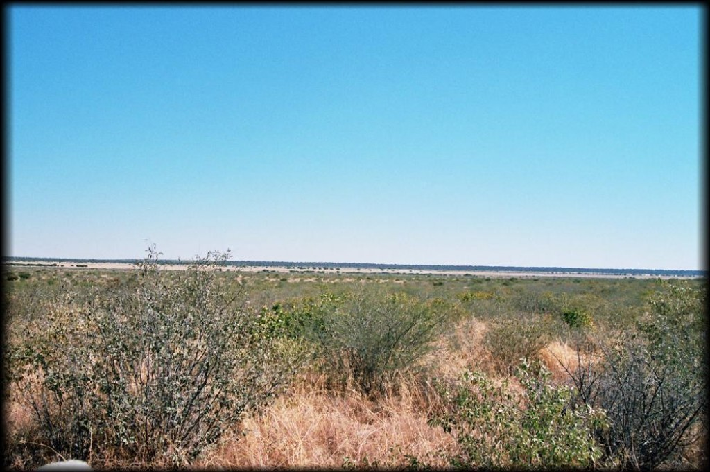 The Kalahari Landscape