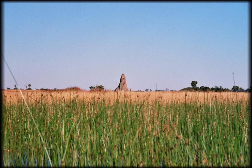 The landscape is dotted with huge termite mounds.