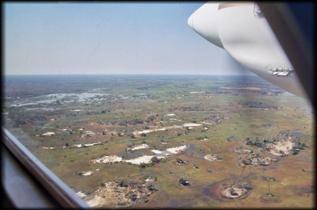 We flew over Chief's Island into the Moremi Reserve.