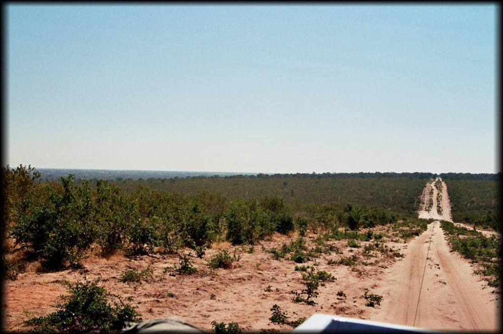 The drive from Moremi to Savute was a long one through a lot of scrub and rough roads.