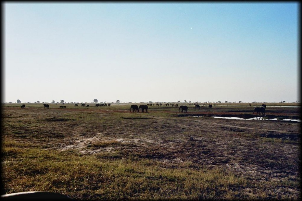 This is what Chobe is about.  It is home to 50,000 elephants.