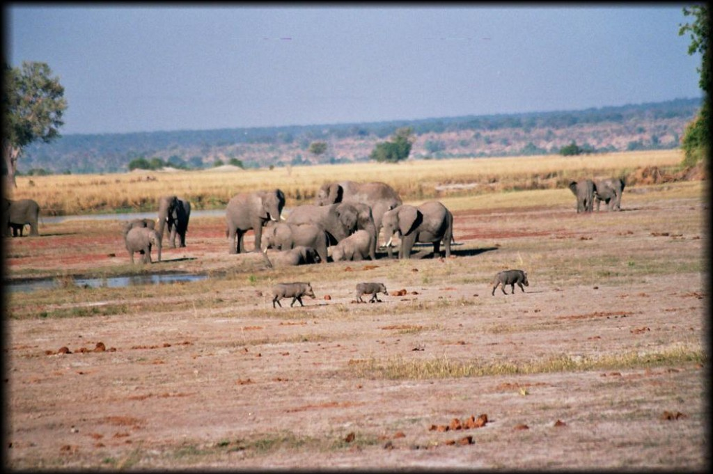 Those are warthogs in the foreground.  We were constantly blown away by the diversity and abundance of animals.