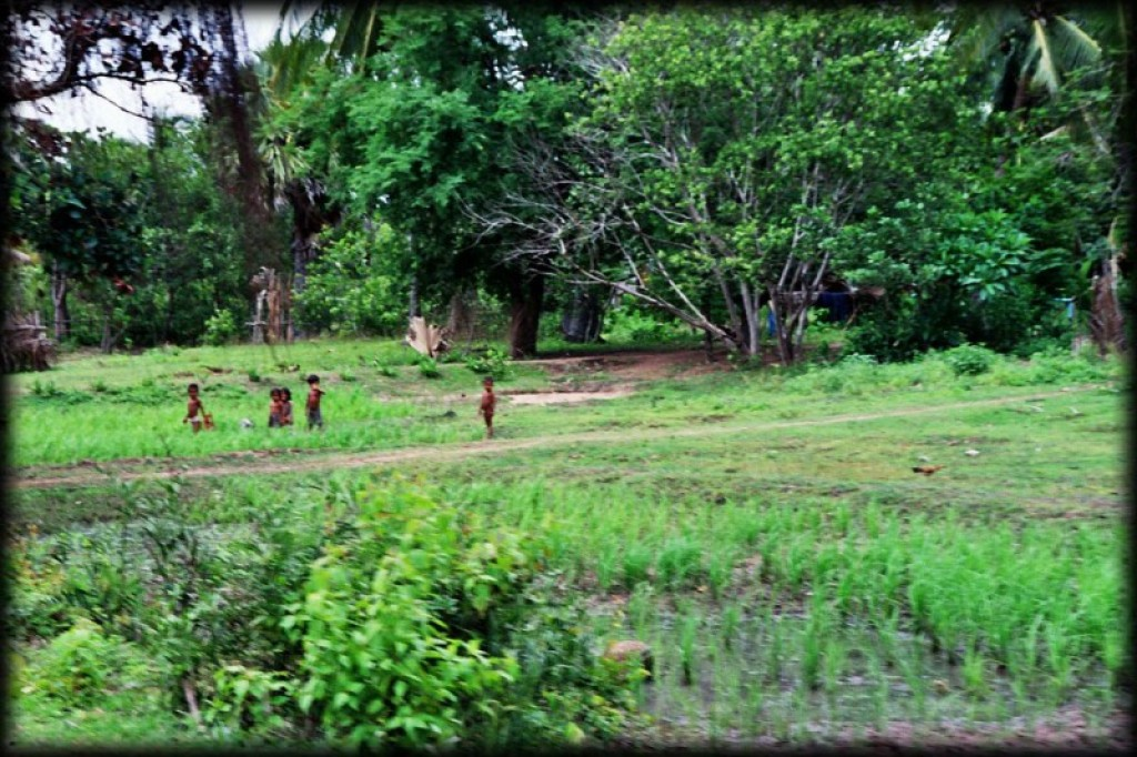 The countryside in and around Siem Reap and Cambodia.