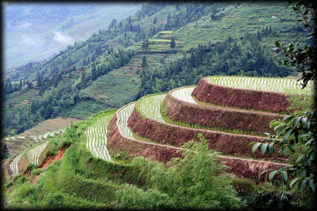 Longshen, or Dragon's Spine Terraces, is known for terraced rice paddies that stretch as far as the eye can see.  It was a highlight of our visit to China.