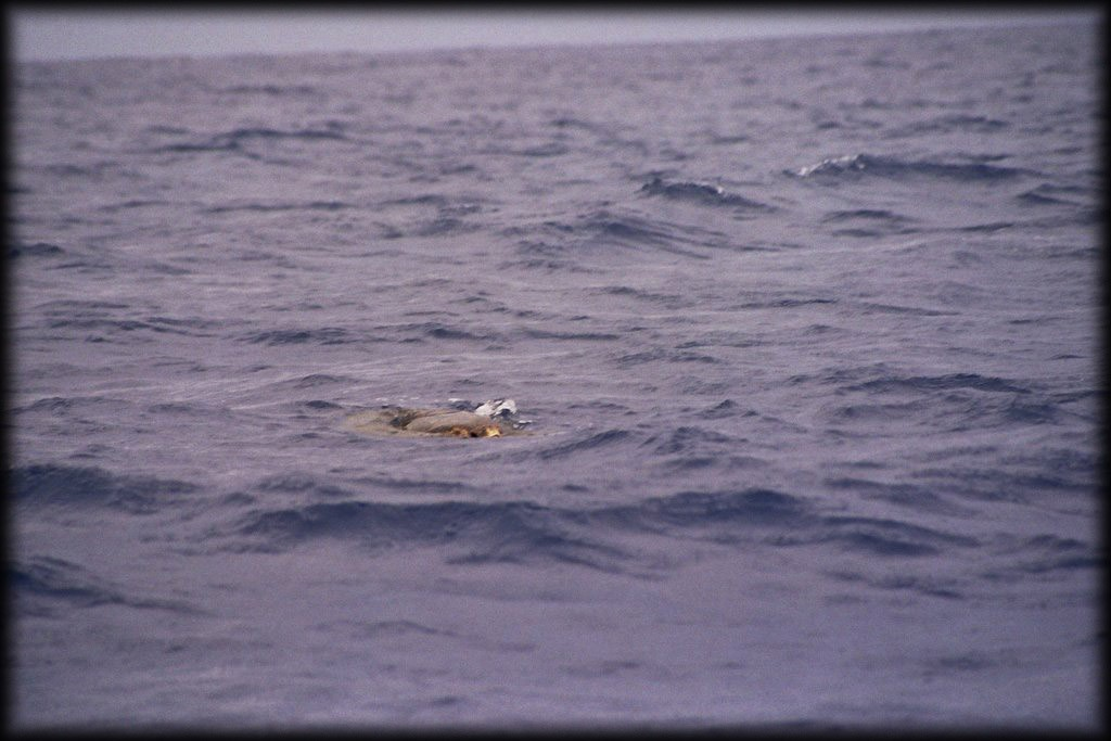 We saw a lot of sea turtles.