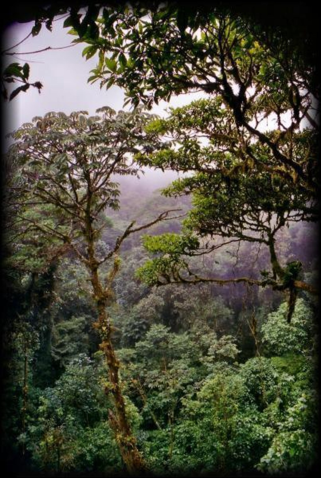 We visited the cloud forests of Monteverde and Santa Elena.