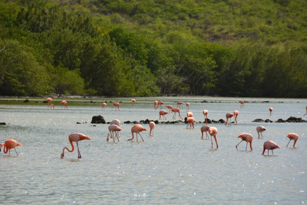 The flamingos were a truly amazing sight.