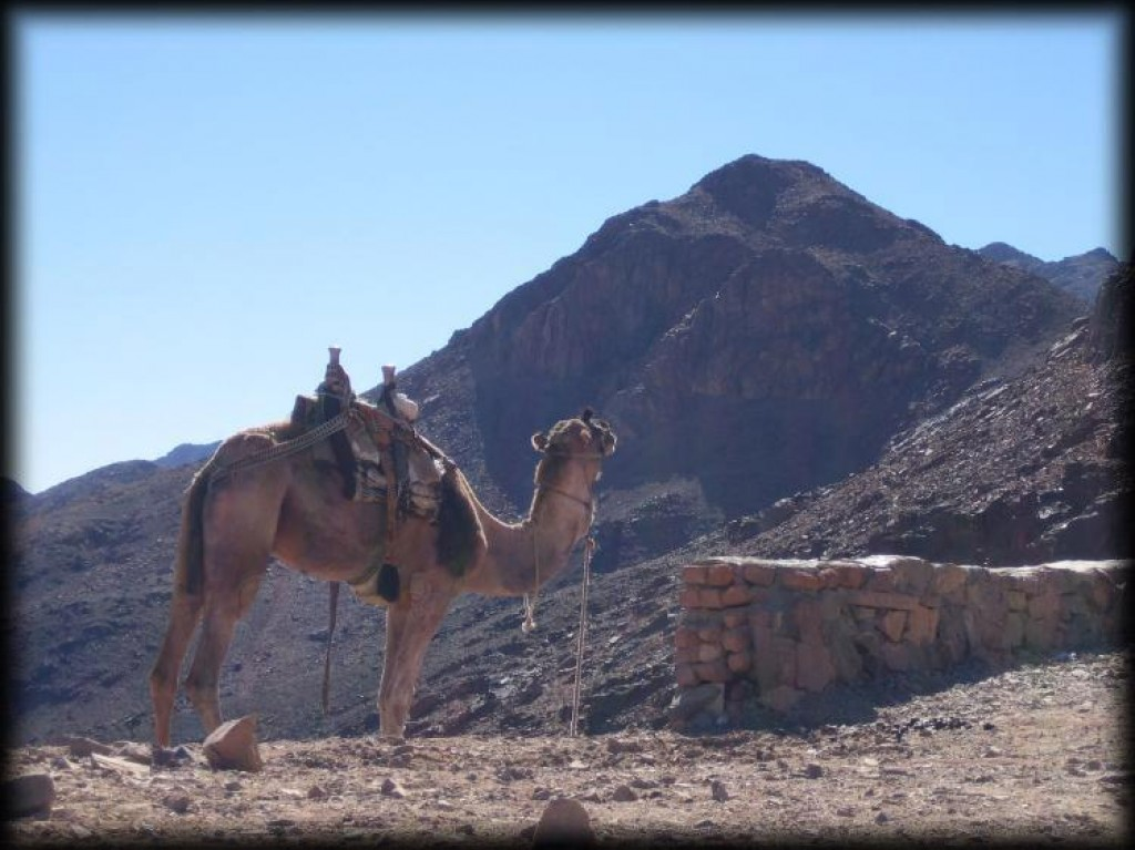 Although the popular tourists thing to do is to climb the mountain in the early morning and watch the sun rise over the Sinai desert, we chose the much more relaxing option of walking up in peace after the crowds had come back down.  Camels are also available to ferry tourists up most of the way.