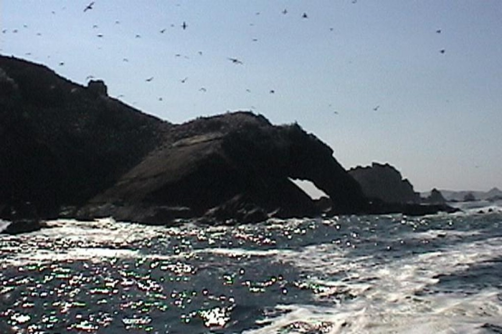 We took a boat trip out to see the Sept-Iles.  Our first stop was Ile Rouzic, home to a colony of 15,000 pairs of gannets.