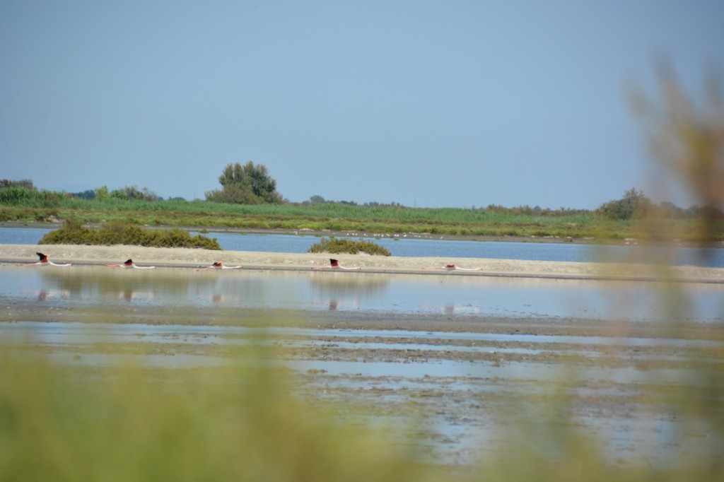 The scenery of the Camargue region, just south of Arles, was fascinating - flamingos, white horses, and cool looking salt pans.