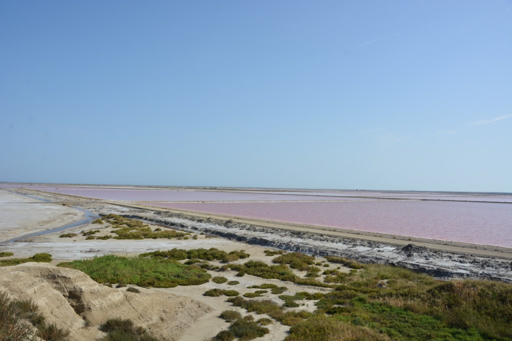 Salt pans at the edge of the area.
