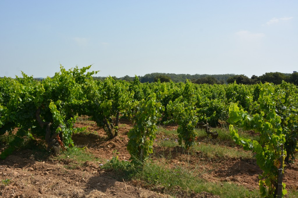 A wonderful day wine tasting in Chateauneuf du Pape!  Unlike California wineries, it is difficult to go winery to winery without appointment.  However, in the city itself, it is possible to go from tasting room to tasting room and try out many different wines.