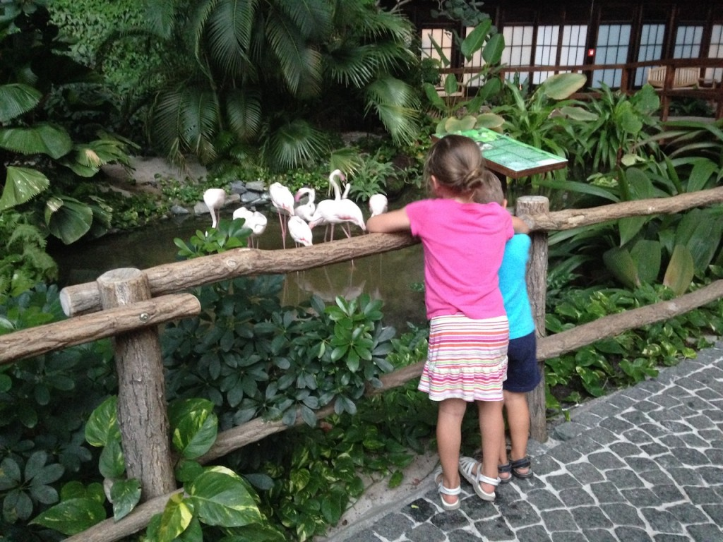 There is a rainforest area you can stroll through, complete with flamingos.