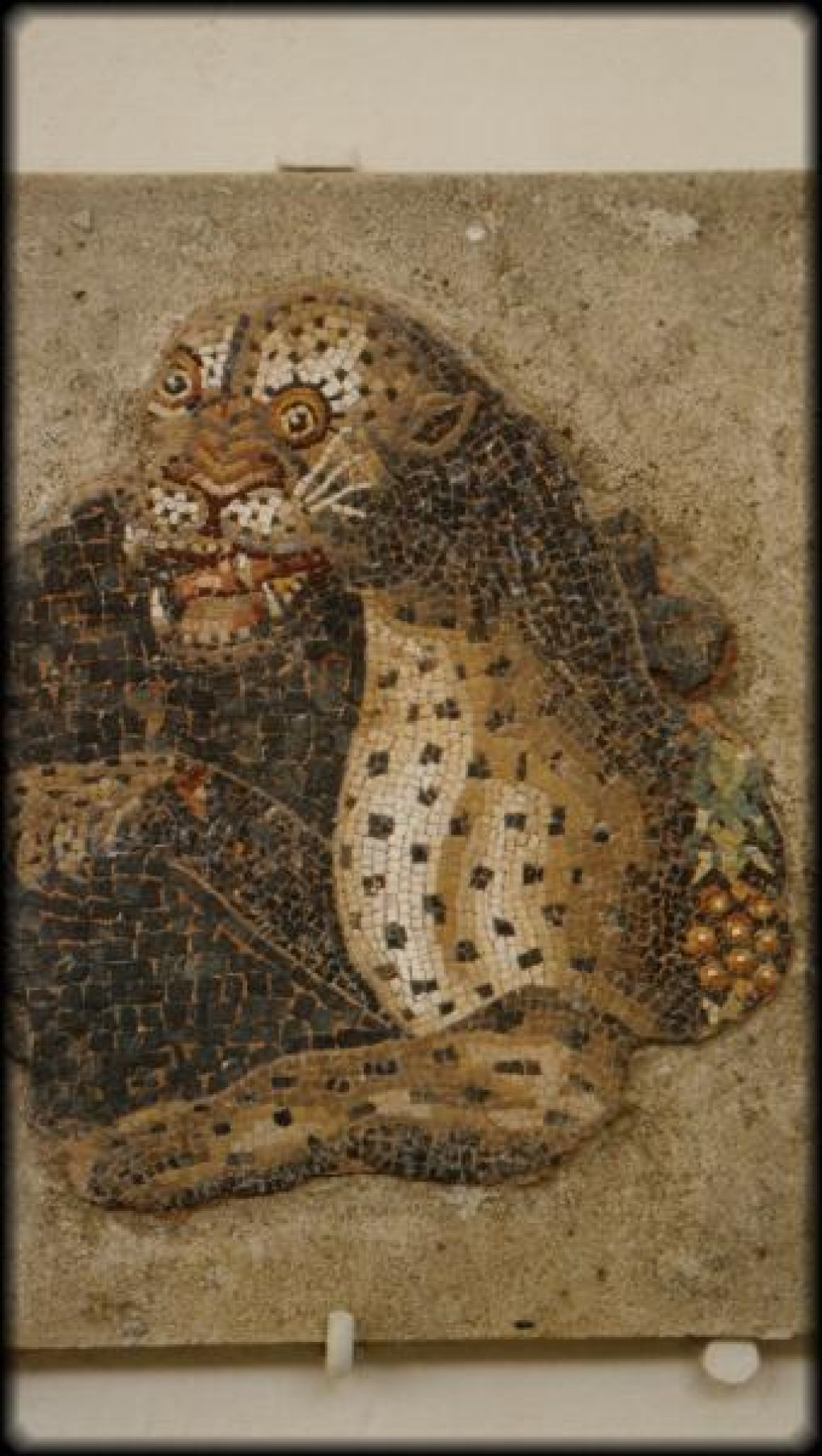 A panther mosaic from the House of Dionysus.