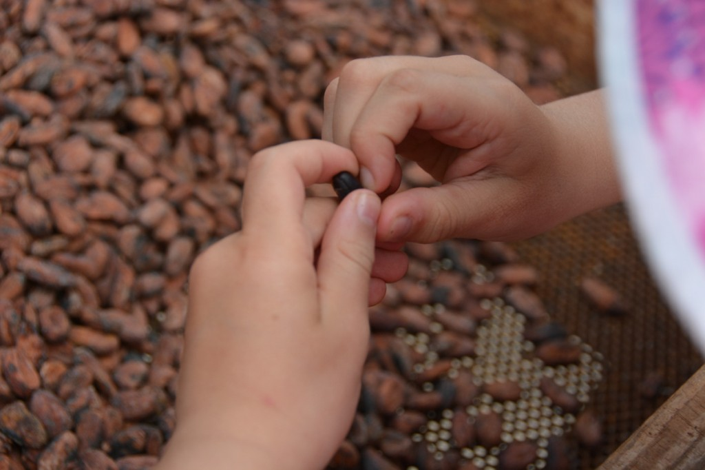 Exploring the dried cocoa beans