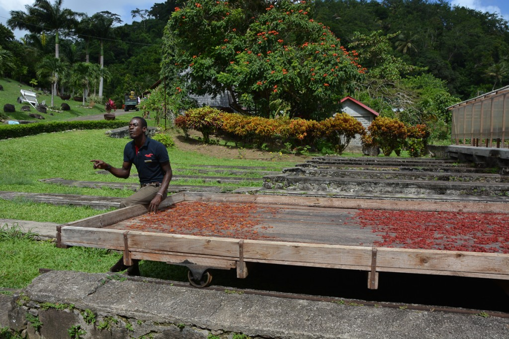 Explaining the cocoa drying process
