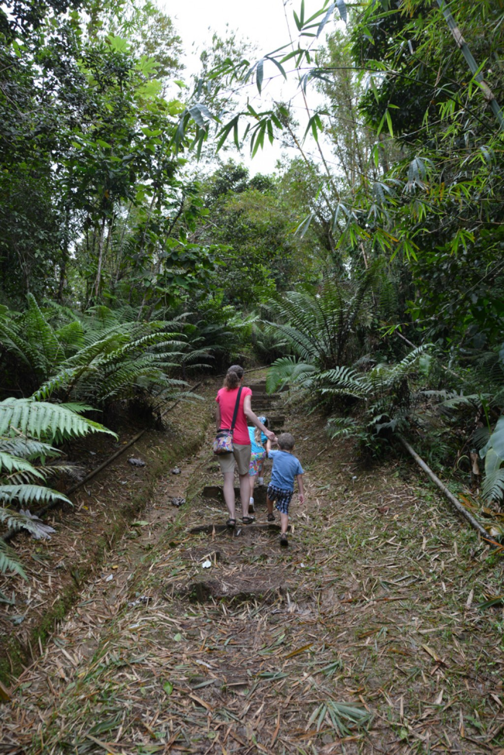 There is a lot to explore in the Grand Etang Rainforest, but we were somewhat limited by having a 3 and 5 year old with us.  Nevertheless we had a great time on the short hike we did, seeing the mono monkeys, and exploring the lake.