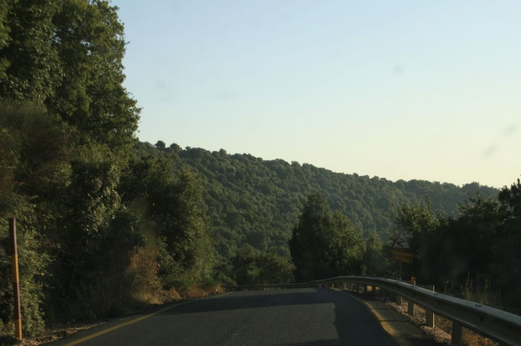 We toured the Golan Heights by car. The roads are great, and the scenery is very pretty.