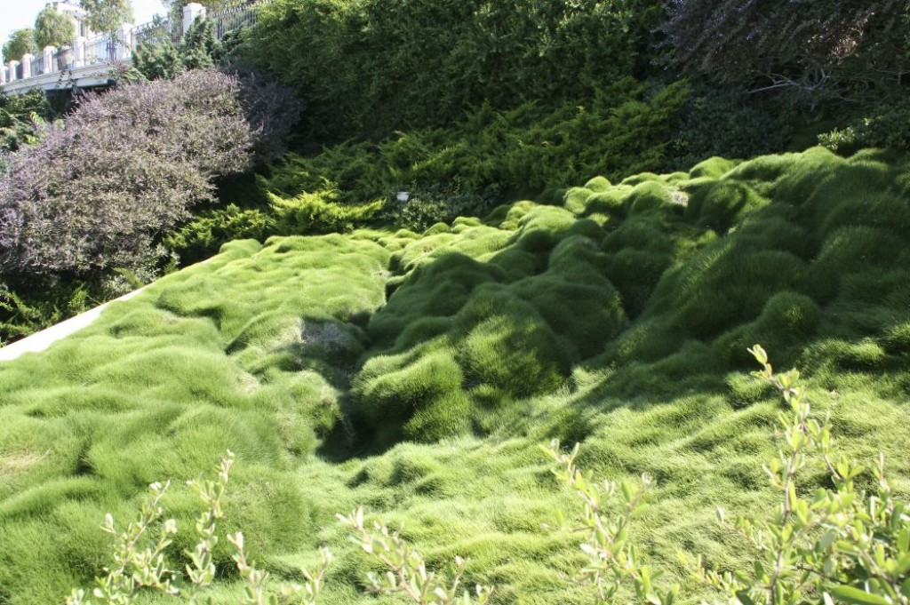Interesting grass formations in the Bahai Gardens.