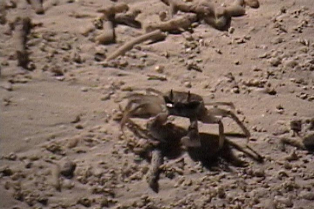 Crabs were all over the beach at night.  It's amazing how fast they move.