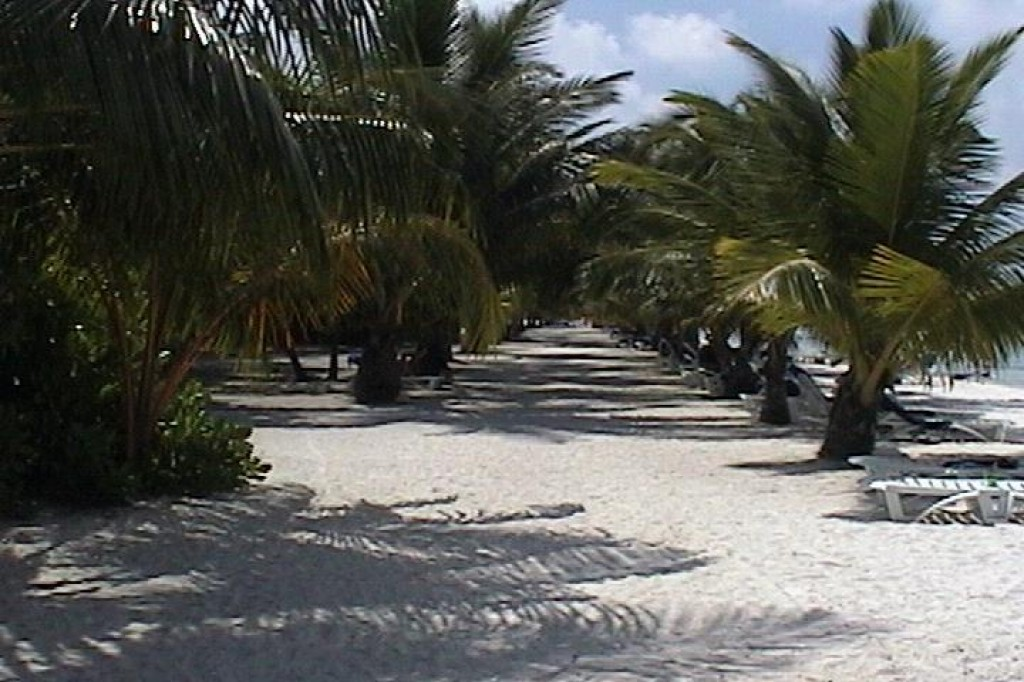 This is the view down the main part of the beach, at the front of the club.  There was shade everywhere.
