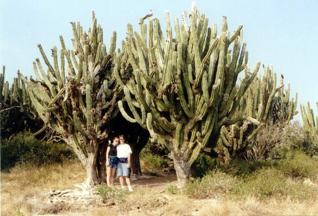 Here we are at Bird Island.  Nice cactus.  Thanks to the photographer, Jes�s, for taking this photo.