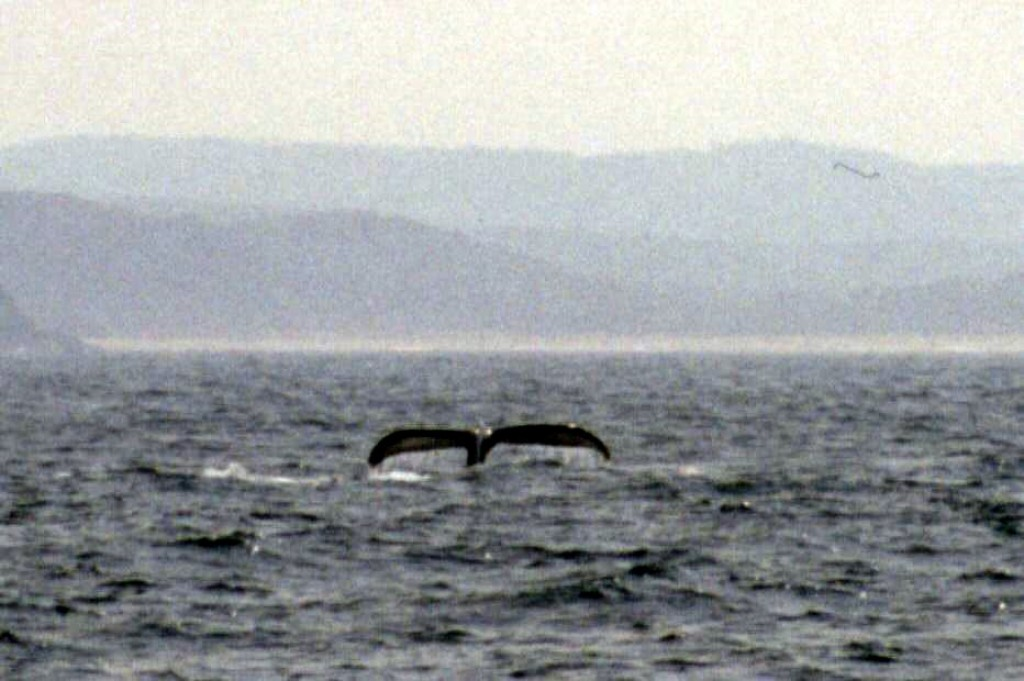 Thankfully, on the way back, we saw another whale.