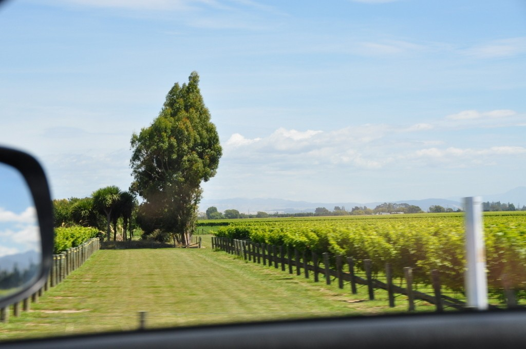Driving from Picton to Blenheim was a great introduction to all the vineyards of the area. It was a very easy drive.