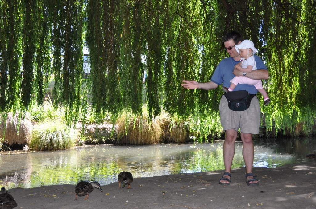 Feeding the ducks along the Avon River - a fun thing to do with children while waiting to punt on the Avon.