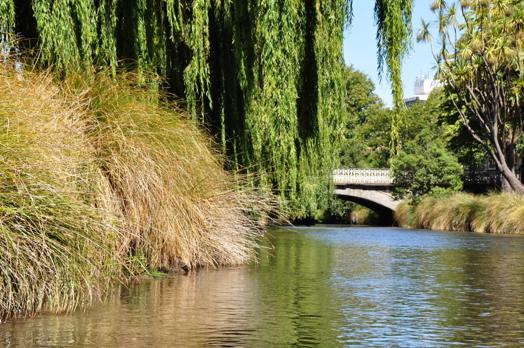 Willows over the Avon