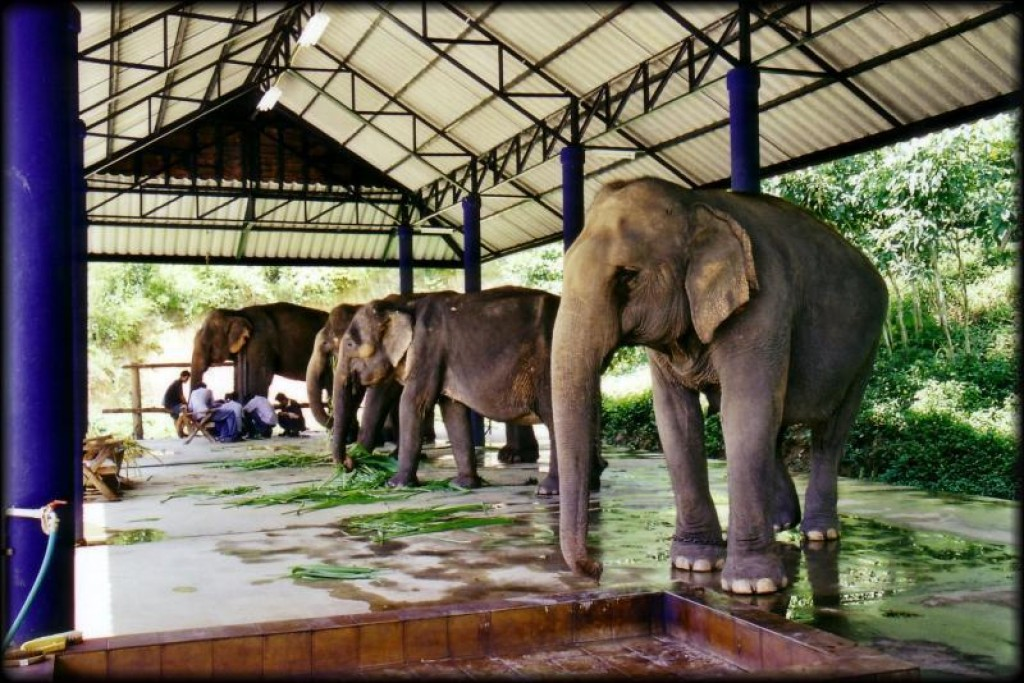 There is an elephant hospital at the center, where they take care of elephants brought in from neighbouring countries that are hurt.