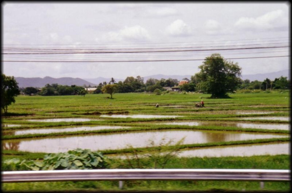 Rice paddies on the way north to Chiang Mai.