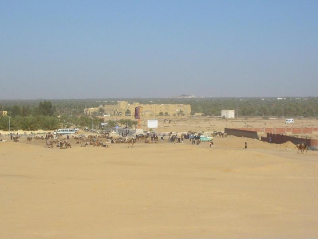 We headed to the Grand Dune (right next to the Festival Grandstand).  I think almost every camel from within a 100 mile radius of the town was there (regardless of age or health) pressed into service to carry tourists for 1 hour 'treks' into the desert. We passed.