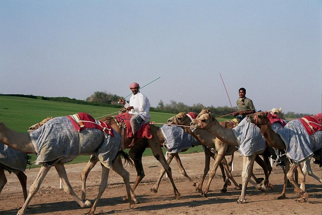As part of our tour with Arabian Adventures, we visited the Al Wathba Camel Race Track outside Abu Dhabi.