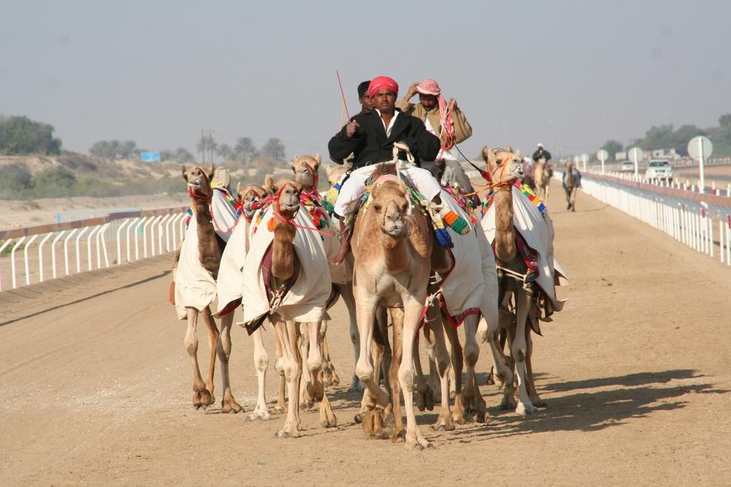 We went on a day trip with Arabian Adventures called 'A Day in the Dunes'.  The day trip started with a visit to the camel race track outside Abu Dhabi.