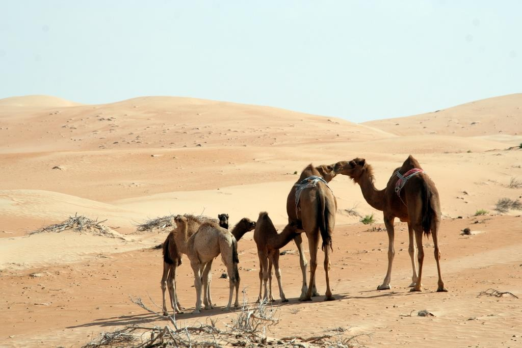 We spent a day in the dunes with Arabian Adventures. We visited a camel race track, a camel farm, and went for a dune drive.