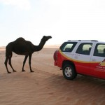 Camel and Arabian Adventures Car