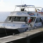 Dive Dominica whalewatching boat
