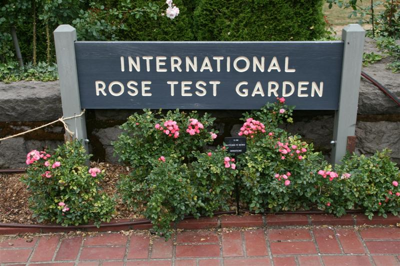 Roses In Garden: Ian And Wendy's Travel Blog The Beautiful International