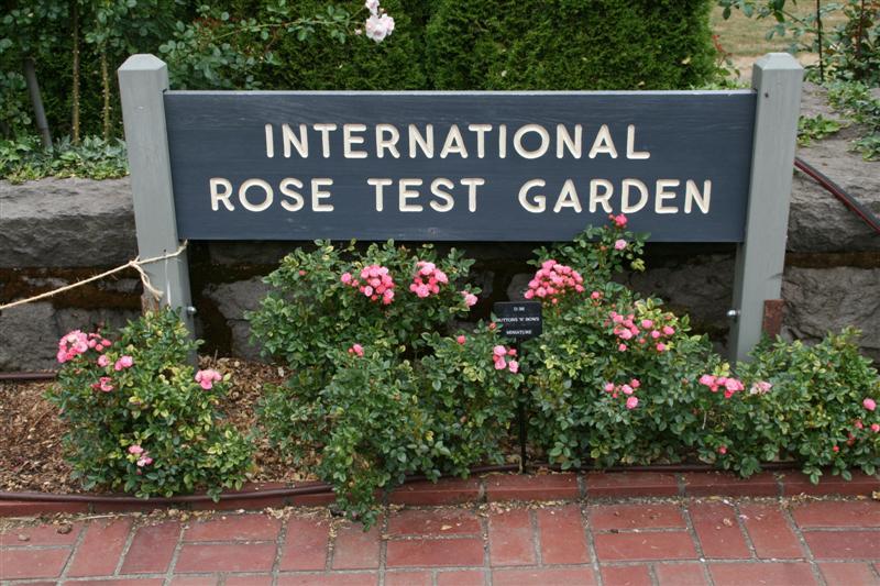 Ian And Wendy 39 S Travel Blog The Beautiful International Rose Test Garden Portland Oregon