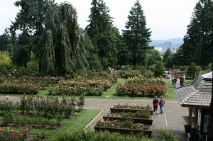 View over the International Rose Test Garden