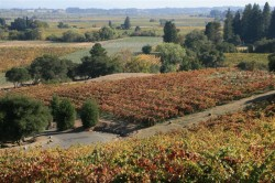 The view from Armida Winery