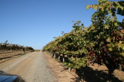 Road leading to Mounts Winery