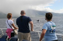 Whale watching with Pacific Whale Foundation