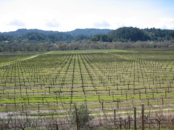 Sweeping views of Dry Creek Valley, Wilson Winery, Sonoma County