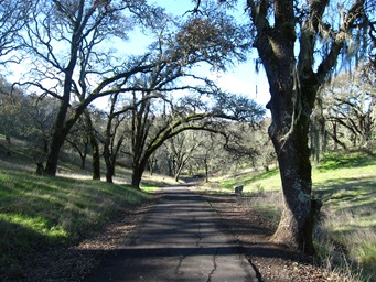Paved trails lead through the oaks at Sonoma Valley Regional Park, near Glen Ellen.