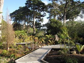 A boardwalk leads you through time in the Primative Plants Garden at the San Francisco Botanical Garden at Strybring Arboretum in Golden Gate Park