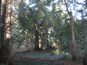 Enjoying the tranquility on the Redwood Trail, San Francisco Botanical Garden at Strybing Arboretum, Golden Gate Park