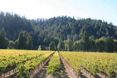 The view from the tasting room deck at Korbel Champagne Cellars, Russian River Valley, Sonoma County