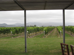 View of the vineyard from the tasting room (cellar door) at Spy Valley Wines, Marlborough, New Zealand